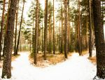Forest by Kissi94