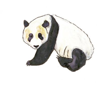 giant panda by mama-Lua