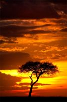 My Africa 35 by catman-suha
