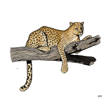 Leopard in a Tree by clairestclara
