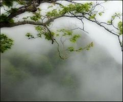 Misty mountains... by ansdesign