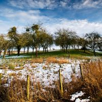 The Snow Orchard by Dave-Ellis