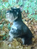 autumn_Jerry by Alice-Coal