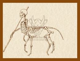 Centaur skeleton by Xenothere