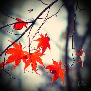 http://th03.deviantart.com/fs34/300W/f/2008/292/3/a/it__s_autumn__by_einfachso.jpg