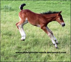 Friendly Mare Foal 13 by okbrightstar-stock