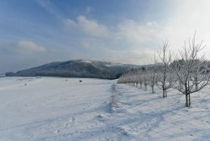 Winter impressions by duncan-blues