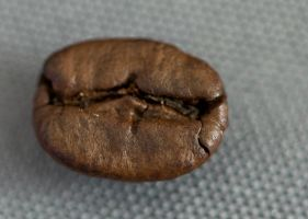 Coffee beans_2 by gargamelix