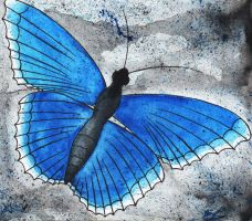 The Blue Butterfly by Willowen