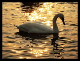 Swan by DSent