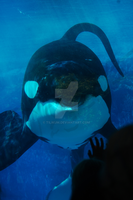 So happy how 'bout you? by Tilikum