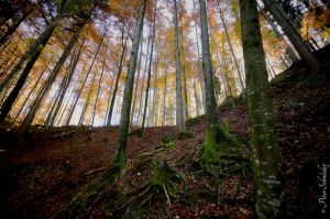 Forest. by Phototubby