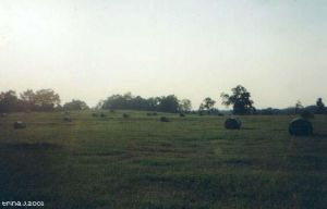 Rolling Bales by trina