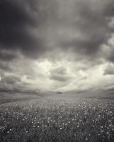 background stock403 by Sophie-Y