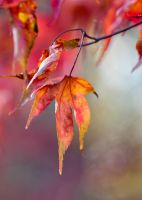 Autumn colours 5 by AngiWallace