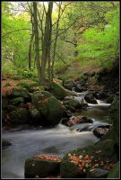 Peak District Woodland Stream by nitsch