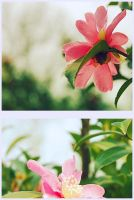 flower2 by dyefish
