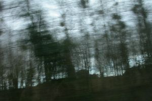 Ghost_trees_by_missumlaut-d8ai6do