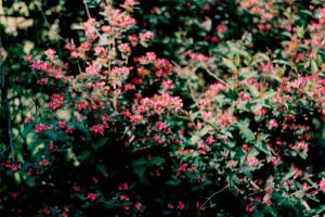Pink Flowers by sophierevell