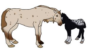 Appaloosa Mare and foal by J4-Coltrain
