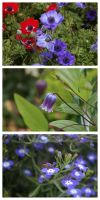 Blue Bunch by majesticnocturne