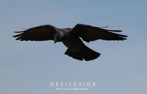 IMG_0653 by D3vilusion