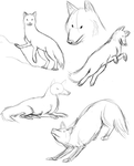 animal anatomy practice 2 by Squeekleen2