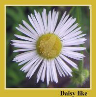 Daisy like by painting-with-light