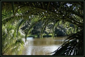New Orleans City Park 3 by SalemCat