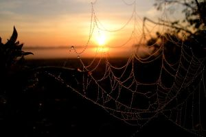 Sunrise Through a Web of Pearl by evalesco5