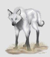 Silver maned wolf by liengod