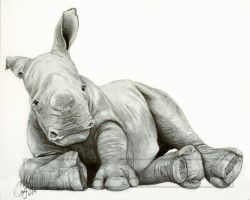 Baby White Rhino by BlueCea