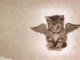Angel Cat by real-maximus