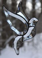 White Winged Dove by TheGlassMenagerie