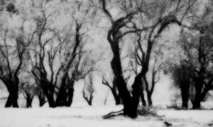 Forest in Dream: Infrared by SadikERGUR