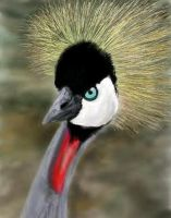 Crowned Crane by davincipoppalag
