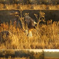 .: Hawk Hunt :. by jon-rista