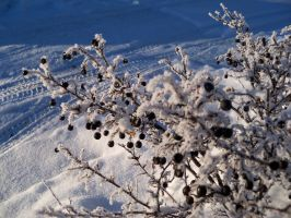Snowy Branches by firebutterfly-narya