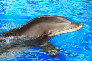 Dolphin close up by Celem