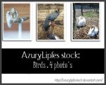 Birds pack2 by AzurylipfesStock