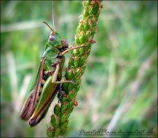 Green Cricket by DesertedPlaces