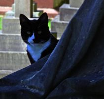 graveyard cat by awjay