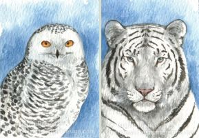 Snowy Owl + White Tiger ACEOs by Pannya
