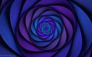 Blue Rose by Colliemom