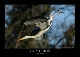 Heronry.5 by THEDOC4