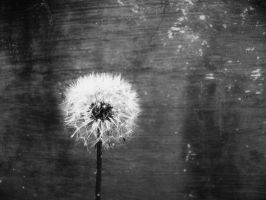 Dandelion by Michaela-Johnson