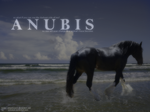 anubis - for kyrie. by bronzeth