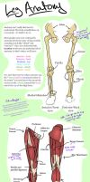 Leg Anatomy -- Seriously. by Z-In-Your-Hair