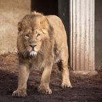 I am the king by LexH