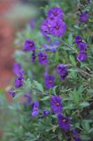 Splotches of Purple by AtomicBrownie